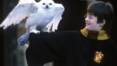 Image de « Harry Potter 2 de John Williams »